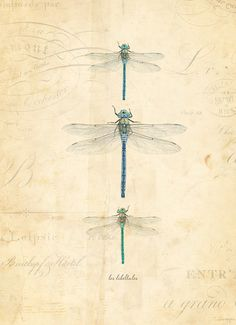 """Vintage Dragonflies """"Les Libellules"""""""