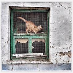 #myinstagram365proyect día018 aquí hay #gato #encerrado #aguilardecampoo