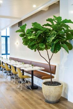 Cafe Gratitude in downtown LA designed by Wendy Haworth | Remodelista | Modernica Case Study Fiberglass Shell Chairs with Eiffel Base | http://modernica.net/eiffel-side-shell.html