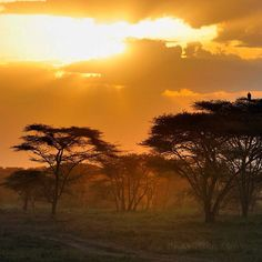 #Sunrise moment in #Amboseli, #Kenya. #Africa's color www.reiseknipse.de  Amazing photographer moments by my photo story #DemipressKenya   All pictures @ by me @demipress www.demipress.me + www.reiseknipse.de Photographed #Nikon #D750 and the new lenses Nikon AF-S #NIKKOR #20mm 1:1,8G ED. The new focal lenses #Nikkor20mm are clearly my favorites for my work.   #africa #travelphotography #nature #landscape #reiseknipse #kenya #safari