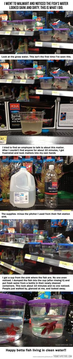 A little something for the fish…  -  This person is a hero.  Who ever you are, thank you from all the poor little fishies out there!