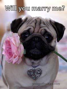 a pugs guide to dating dating female police officer