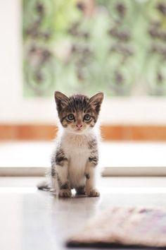 Soft kitty warm kitty little ball of fur. Happy kitty sleepy kitty purr purr purr.