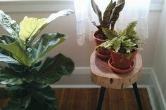 Indoor plants even black thumbs can keep alive