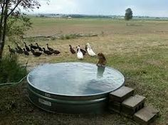 galvanized tank swimming pool - Google Search