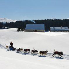 Montagnes du Jura, Jura, France credit to @ montagnes_du_jura photo : @ Stéphane Godi *** . #dogteam #winter #forest #travelwithdog #campingwithdogs #neverstopexplore #explore #exploremore #dogrunning #instatravel #optOutside #dogrun #runningdog #gowild #nature #wild #staywarm #winter#wintergloves #actionheat #coldweather #cold #reynauds #coldhands #fahrenheit #fahrenheitai #gloves #warmgloves #warmsocks #heatedgloves