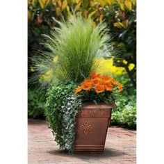 Container Gardening Ideas Orange Surprise, by Ball Horticultural Container Size: 14 inches, Exposure: Sun New Day™ Clear Orange gazania Emerald Falls dichondra Silver Falls™ dichondra Pony Tails Mexican feather grass Fall Planters, Garden Planters, Flower Planters, Balcony Garden, Large Garden Pots, Small Space Gardening, Gardening Tips, Organic Gardening, Vegetable Gardening