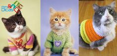 Pets & Dicas: Moldes de roupas para gatos