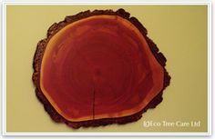 Cake inspiration.  I want a giant, flat thing that looks like someone took a slice out of a redwood tree.  Only one level, about 4 inches tall, maybe 3 feet in diameter.
