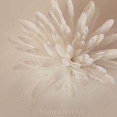 crysanthemum bridal Bianca Snow