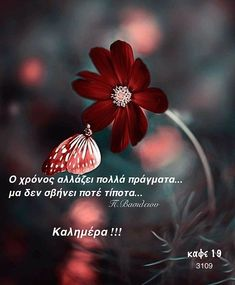 Good Morning Good Night, Good Morning Quotes, Poetry Collection, Different Quotes, Quotes And Notes, Greek Quotes, Dandelion, Inspirational Quotes, Wisdom