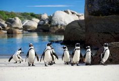 Cape Town Private, Robben Island and Cape point Tour St Croix Island, Clifton Beach, Best Beaches To Visit, Boulder Beach, Cape Town South Africa, Travel And Tourism, Beach Fun, Day Tours, Places Around The World