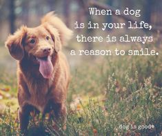 Dogs make us smile, it's a fact!
