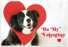 DIY: 5 Minute Valentine -   Take a pic of your pooch with your phone and send a surprise Doggie Valentine text!
