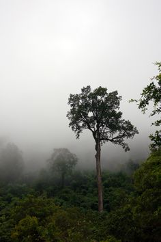 Serene Tree in the Jungle Mist - Chiang Dao, Thailand. Buy this print: http://www.bencrosbiephotography.pixieset.com/photography