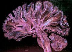 Le 10 migliori visualizzazioni scientifiche dell'anno