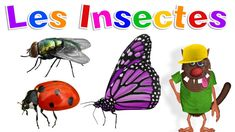 Apprendre aux enfants les Insectes (Learn Insects for Kids - Serie Insects For Kids, Learn French, Bee, Learning, Films, Animals, Videos, Youtube, Insects