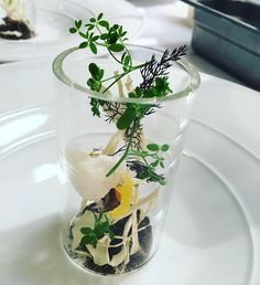 "66 Likes, 3 Comments - Mari.Katsumura (@mari.katsumura) on Instagram: ""Mushroom soup with Meyer lemon and bronze fennel #acadia #tastingmenu #terrarium"""