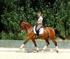 Morgane & Basco du Feuillard #dressage #horse #kwpn #perfection #quintam