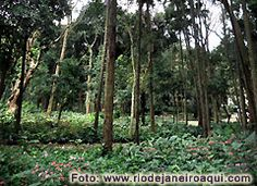 Jardins e floresta no Parque Lage