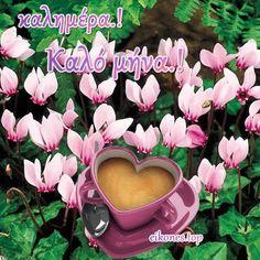 Good Morning, Greece, Plants, Mina, Good Morning Greetings, Be Nice, Buen Dia, Greece Country, Bonjour