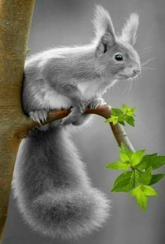 - My list of the most beautiful animals List Of Animals, Animals And Pets, Baby Animals, Cute Animals, Most Beautiful Animals, Beautiful Creatures, Beautiful Pictures, Nature Animals, Woodland Animals