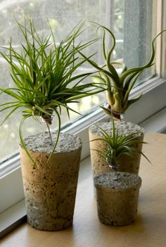 AirplantVessels by AIRPLANTMAN enjoying experimenting with concrete bases. i collected coffee cups for weeks to make these. airplantman.com