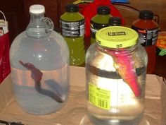 ginormous grow toys iin jars for halloween...before