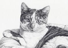 potloodtekening kat Vlinder (www.dyenne.nl)