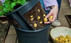 Der  PotatoPot ist ideal für die kleine Kartoffel-Ernte auf dem Balkon