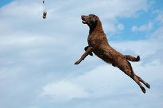 30 Best Hunting Dogs for All Types of Game - Top Dog Tips