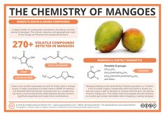 The mango is a classic summer fruit, but for some it can bring out a rash when they handle or eat it. This irritation is not unique to mangos – in fact, there's some surprising chemistry in c…