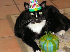 Tescher Cat celebrating at our Carmel pet friendly inn. #carmelcountryinn