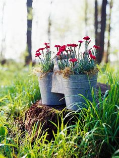 Spur Dianthus to send up a second flush of blooms by shearing off spent flowers. The plants will bloom well into summer when grown in part shade to full sun and watered regularly.