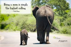 15 Grandchildren Quotes to Warm Your Heart Elephants and grandchildren never forget. - Andy Rooney 15 Grandchildren Quotes to Warm Your Heart Elephants and grandchildren never forget. - Andy Rooney 15 Grandchildren Quotes to Warm Your Heart Grandma Quotes, Mommy Quotes, Daughter Quotes, Family Quotes, Love Quotes, Pet Quotes, Wisdom Quotes, Grandkids Quotes, Quotes About Grandchildren