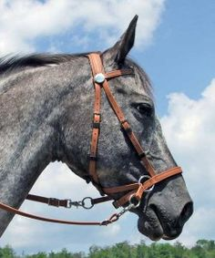 """bitless bridle - Dr. Cooks """"Cross Under"""" style.   This bridle mimics poll pressure (like a snaffle bit) while providing some side-pull action with nose pressure."""