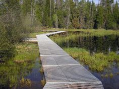 Wetland Boardwalk - interesting texture