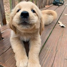 Cute Baby Animals, Funny Animals, Animals Dog, Labrador Puppy Training, Beagle, Dog Icon, Minions, Cute Dogs And Puppies, Doggies