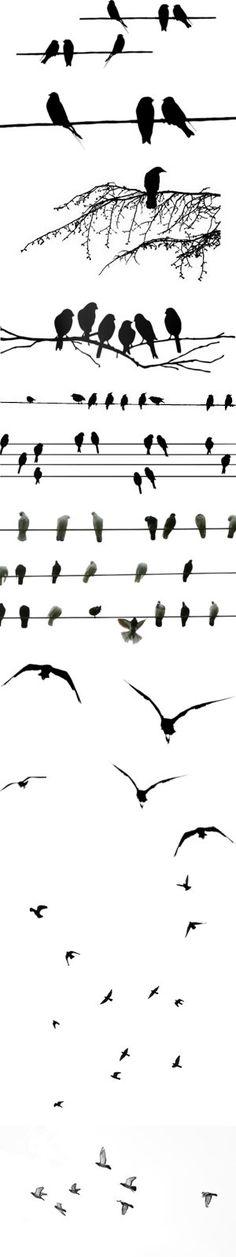 birds / Vögel zeichnen