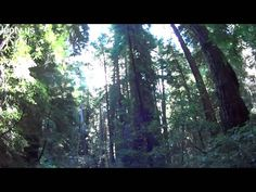 San Francisco is rich in spectacles - take a virtual tour right now! (picture: 0006 Muir Woods00 Main Trail)