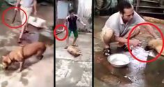 A video taken in Vietnam shows a group of men inhumanely destroying a dog by tying him with a chain, badly beating him and slashing his throat with a knif...
