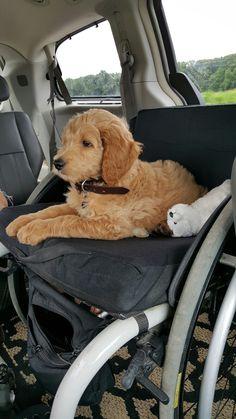 Cooper in the car