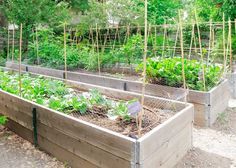 Do's And Don'ts For Your Raised Garden Bed #DigIn