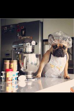 Cooking --> que lindo el perro en la cocina, con su gorro y todo :)