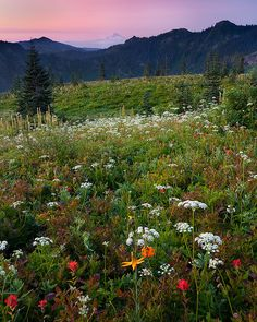 Would love to have enough acres to have wildflowers in a field in front of my house!