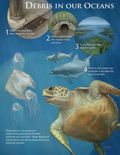 plastic pollution in the ocean- do not punish the innocent animals because you are irresponsible, clean up your own mess safely and properly!