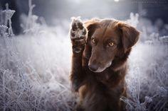 Wave your paw :) - more photos: https://www.facebook.com/PhotoartForHappyPaws/