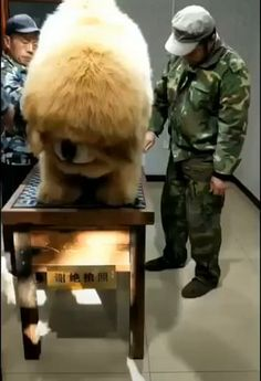 See more ideas about Cutest animals, Fluffy animals and Funny animals. This is the most adorable thing I have ever seen. Why dogs are the best of all things Funny Animal Pictures, Funny Cute Little Animals, Cute Funny Animals, Cute Cats, Cute Animal Videos, Funny Animal Pictures, Funny Animal Gifs, Cute Dogs And Puppies, Big Dogs, Doggies