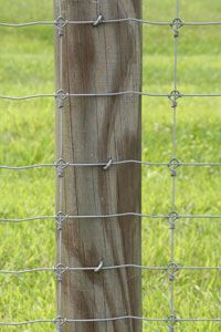Fixed Knot Woven Wire 17/75/6  - 6 Foot fencing perfect for alpacas.