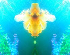 ✧☽ Tank splotches 'Aqua Neeko' ☾✧ #bohemefithome #goldfish Goldfish, Aqua, Butterfly, Outdoor Decor, Water, Bow Ties, Butterflies